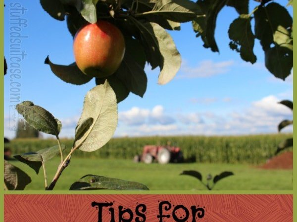 Apple Picking Tips for Fall Fun Activity with Kids - Tips for visiting an apple farm (orchard) via StuffedSuitcase.com