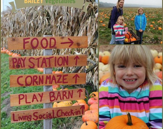 Corn Maze & Pumpkin Patch Seattle Weekend