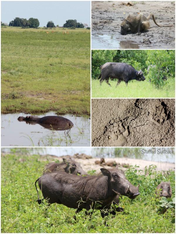 African Animals spotted on a Photo Safari in Chobe Botswana StuffedSuitcase.com