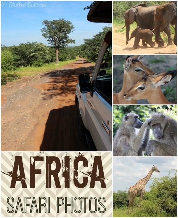 Photos of the Safari Animals I saw in Chobe National Park Botswana, Africa StuffedSuitcase.com travel