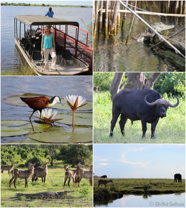 Shots from my safari river cruise during my trip to Botswana, Africa