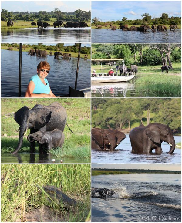 Chobe River Cruise Animals