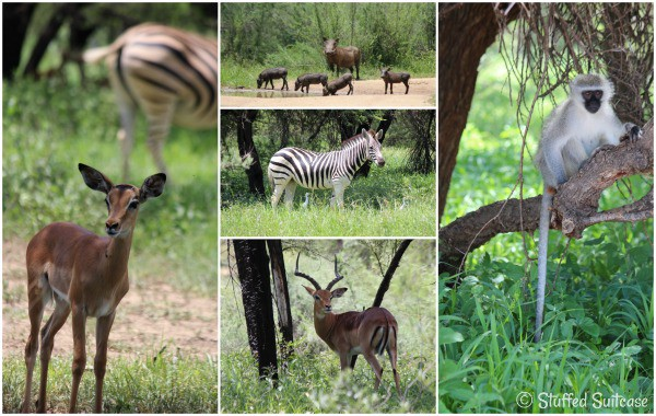 Animals seen on a drive through the Gaborone Game Reserve Botswana Africa StuffedSuitcase.com