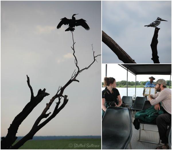 River Cruise Boat & Birds