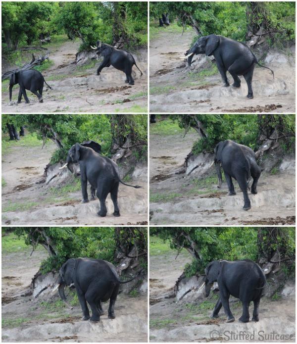 River Cruise Elephant Upsy-daisy