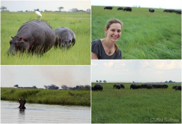 River Cruise Hippos