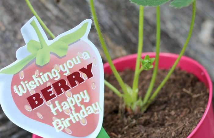 Strawberry plant gift with berry free printable mightylinksfo