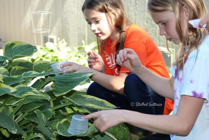 Kids catching bugs in the backyard to create a bug museum StuffedSuitcase.com