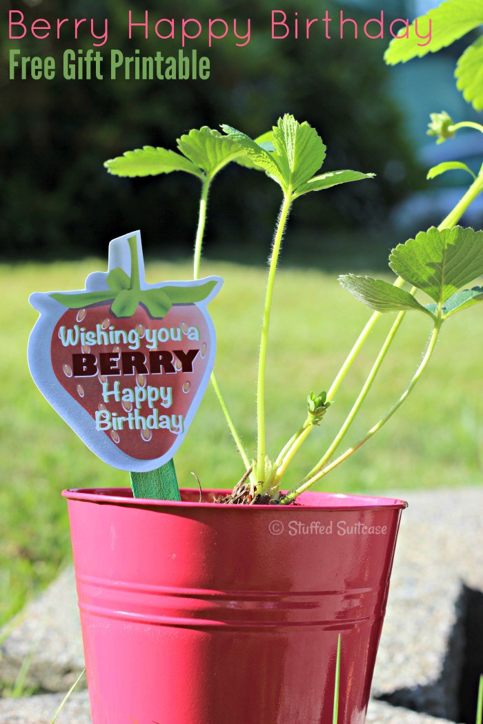 Free Printable for a Strawberry gift like this plant birthday gift StuffedSuitcase.com