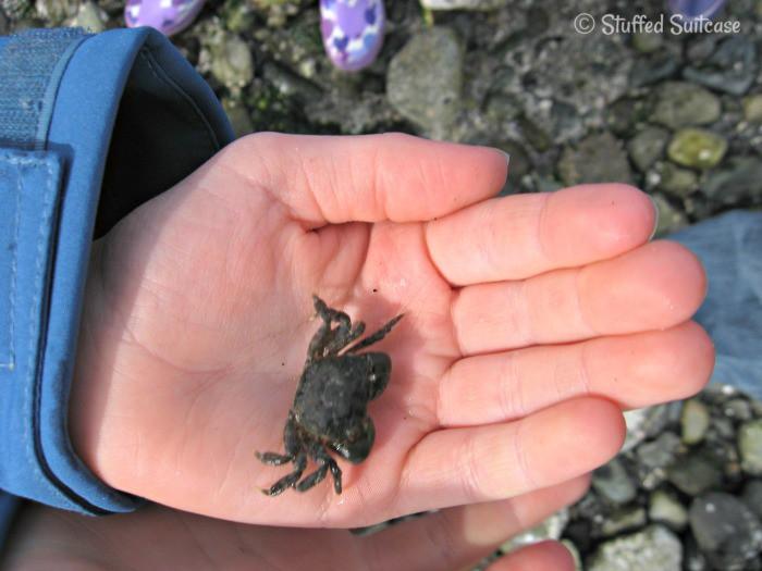 Sealife Crab Find