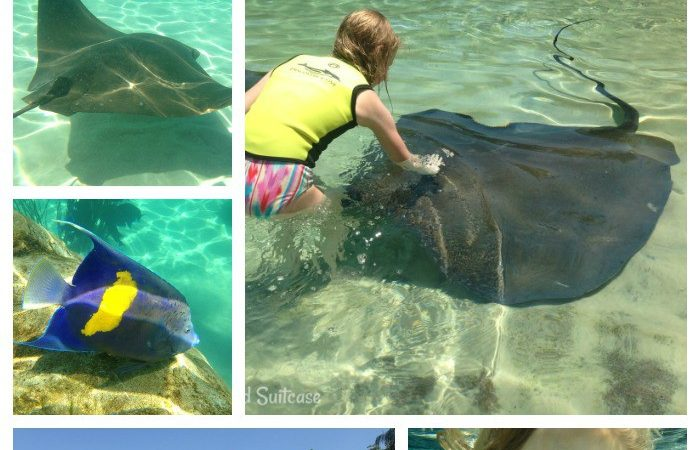 A Day at Discovery Cove in Orlando Florida