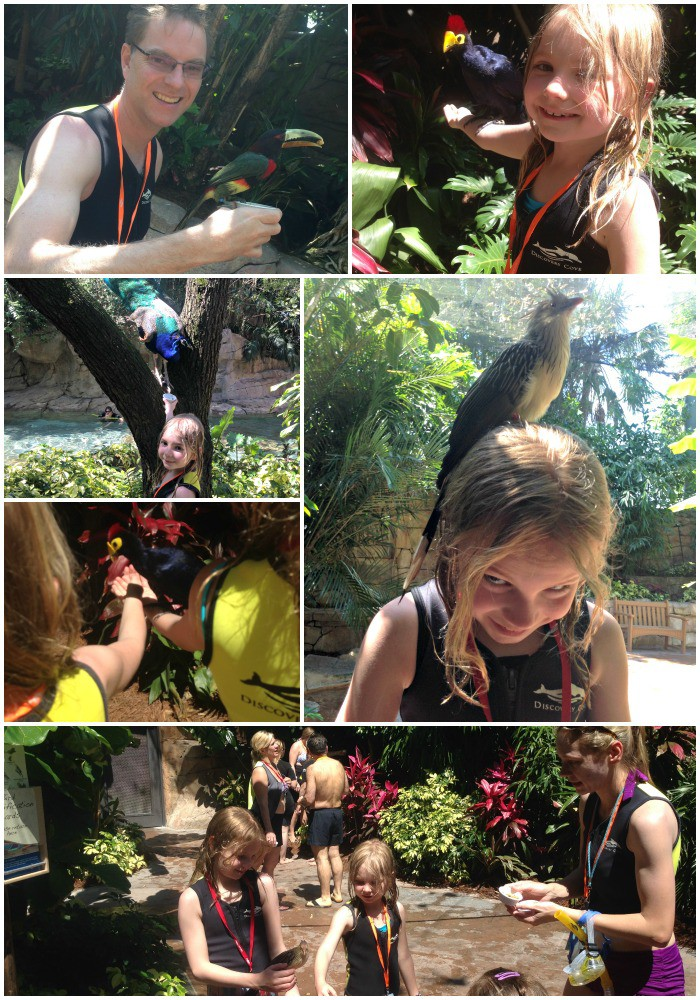 Feeding Birds in Aviary at Discovery Cove