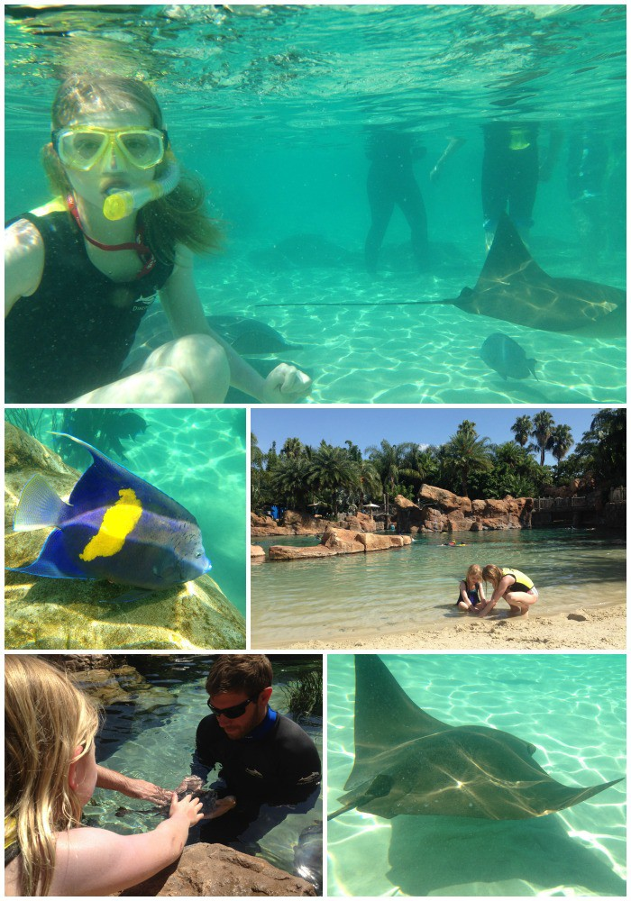 Snorkeling at Discovery Cove Grand Reef