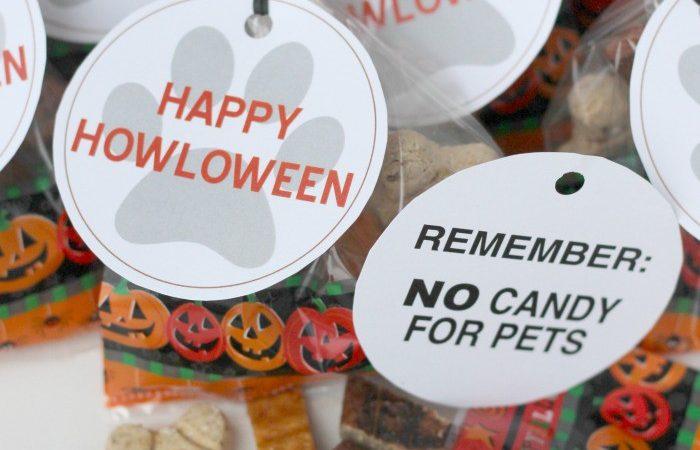 Happy HOWLoween Pet Treat for Dogs #TrickorTreatEm