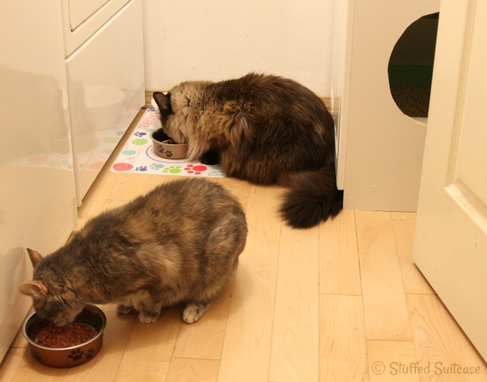 Special wet cat food treat for the kitties! They loved it!