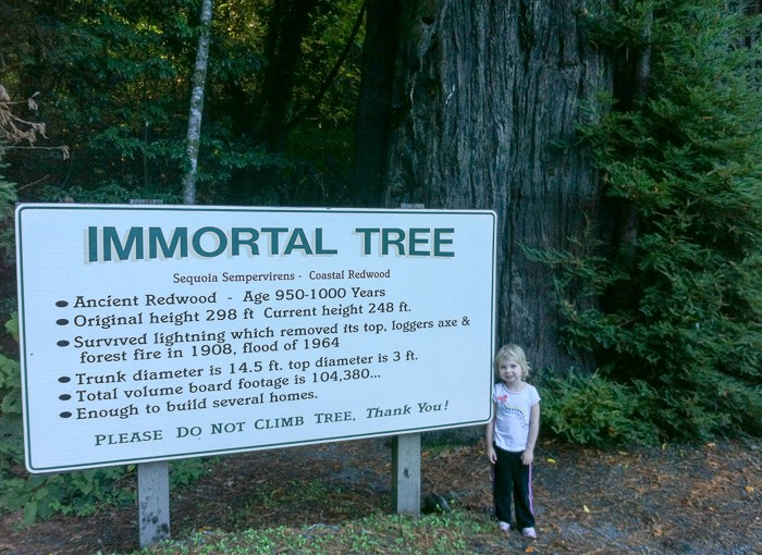 The Immortal Tree has survived lightening, forest fires, and logging. If only we could all be that strong!