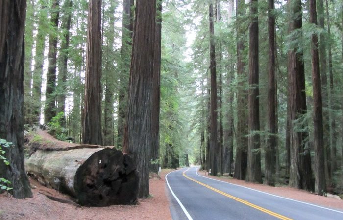 Best Seattle – California Road Trip From Redwoods to Teacups