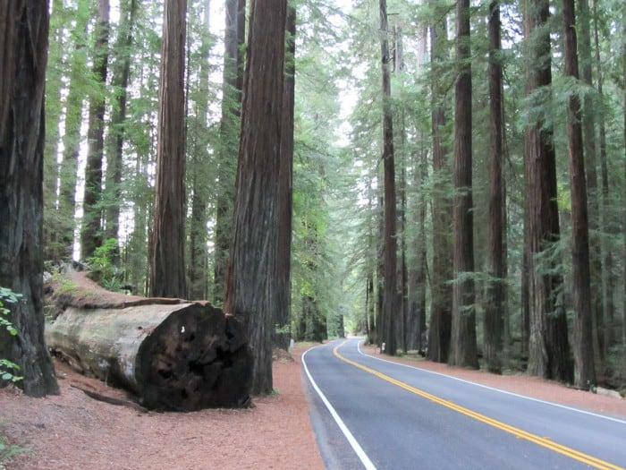 Gorgeous drives through the Redwood Forest and Hwy 101