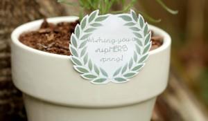 supHERB-spring-gift-planter