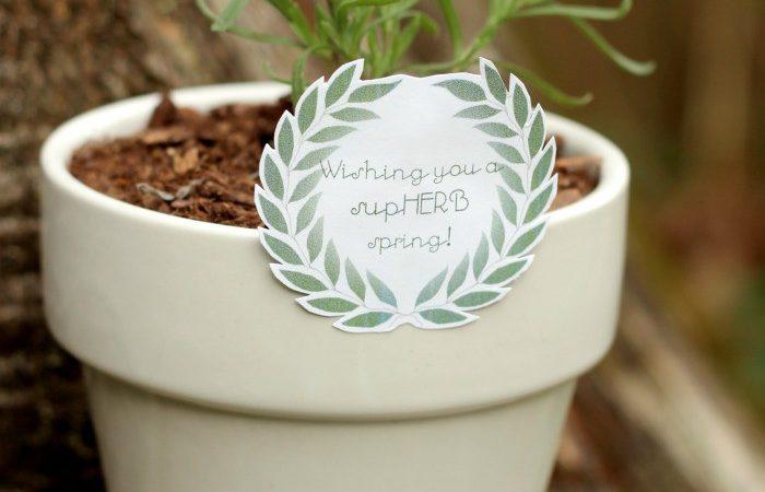 supHERB Spring Gift