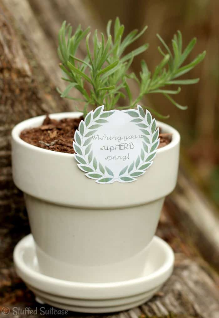 supHERB-spring-gift-planter