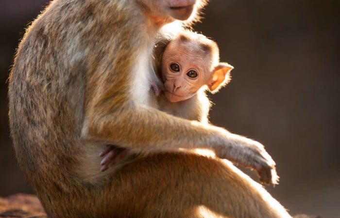 Disneynature Monkey Kingdom – a touching family tale