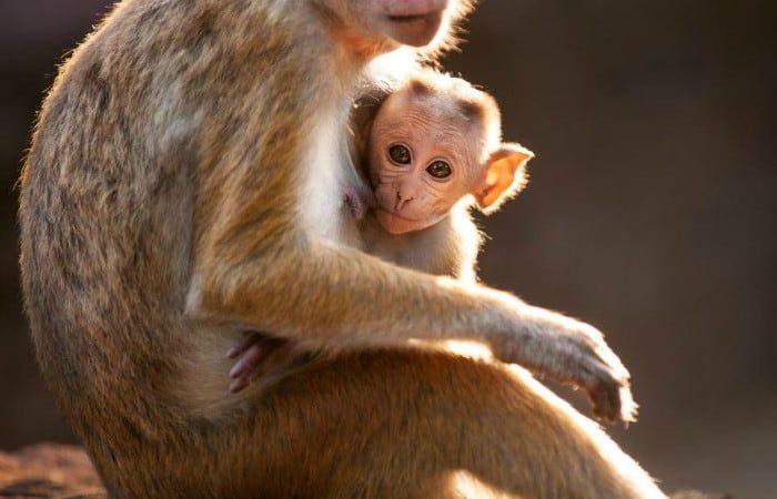 Disneynature Monkey Kingdom – a touching family tale