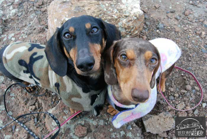 7 tips for hiking with dogs