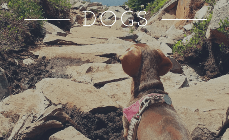 7 Things to Pack when Hiking with Dogs :: A to Z Packing Tips