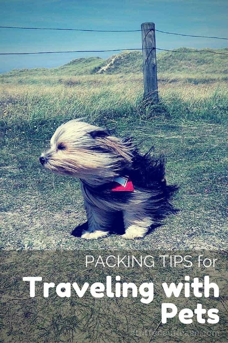 Ready to head out vacation with your favorite four-legged friend? Here are some packing tips to help you when traveling with pets!