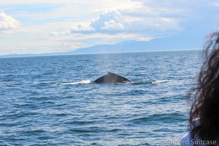 San-Juan-Island-Whale-Watching-1