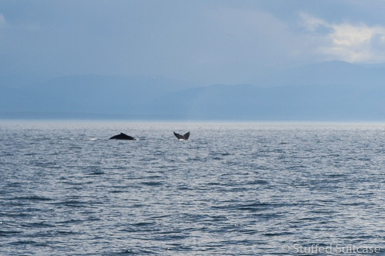 San-Juan-Island-Whale-Watching-2