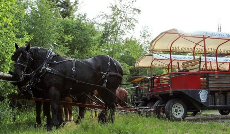 Giddy Up and Chow Down at Last Chance Ranch Wagon Ride Dinner, Helena MT