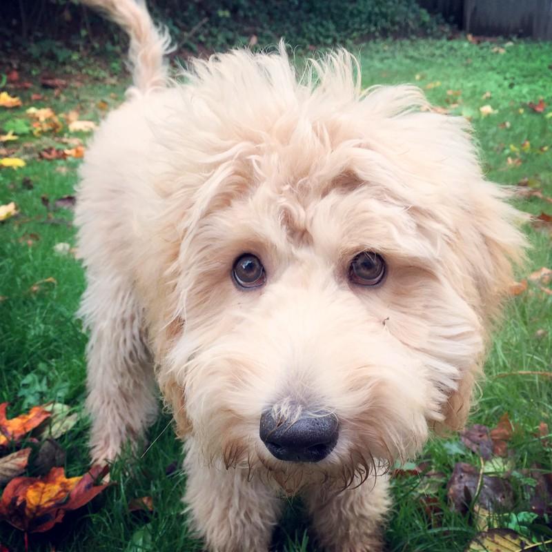 new-puppy-dog-tips-training-5