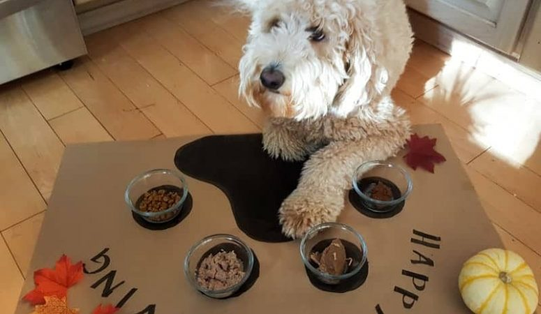 Happy Pupsgiving Placemat: Thanksgiving Dog Food Dining Craft