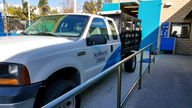 The Behind the Scenes tour at SeaWorld San Diego let's you learn about the rescue efforts on site and see some of their rescued animals | © Stuffed Suitcase