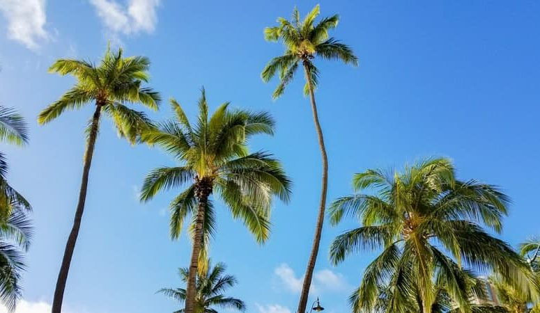 Top 10 Things You Must Do in Oahu, Hawaii