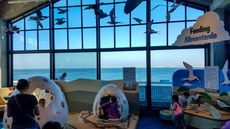 activity area in monterey bay aquarium