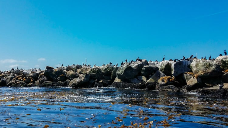birds and sea lions on rock wall in monterey bay