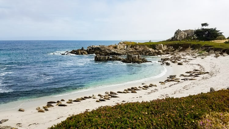sea lions on beach in distance in monterey ca
