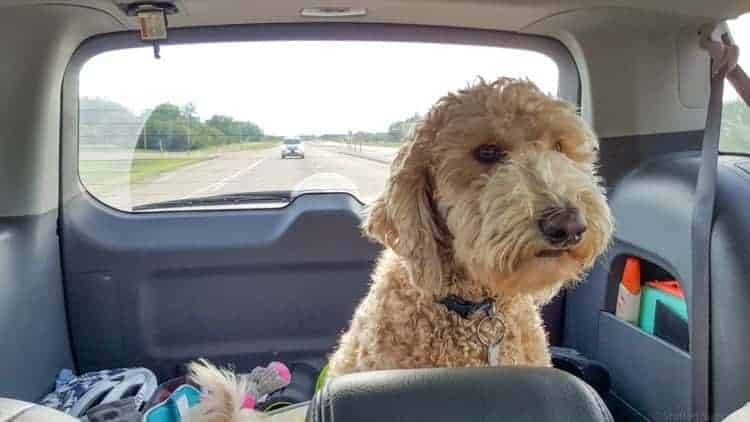 Dog Car Harness >> Tips for Traveling on a Road Trip with a Dog