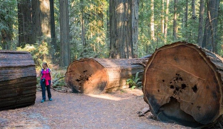 8 Amazing Natural Wonders in California Every Kid Needs to See