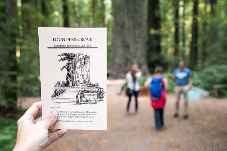 founders grove in Humboldt off Avenue of the Giants