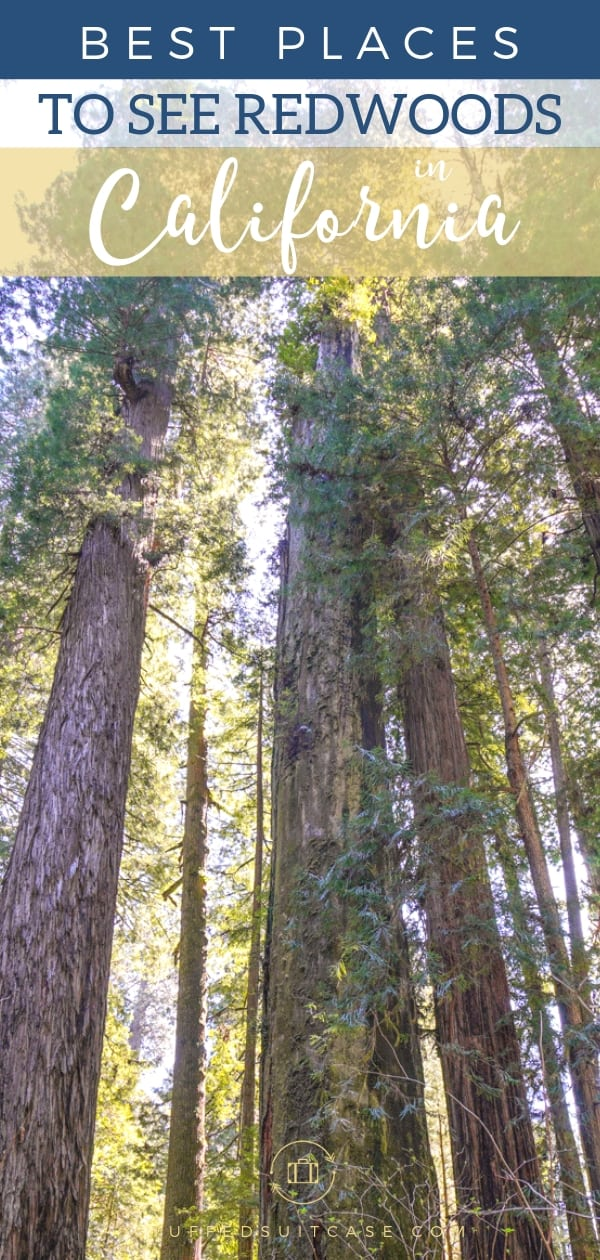 where to see redwood trees in California