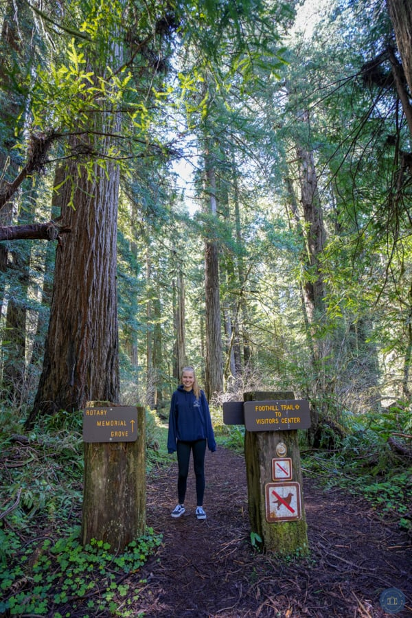 Prairie Creek redwood hiking trail