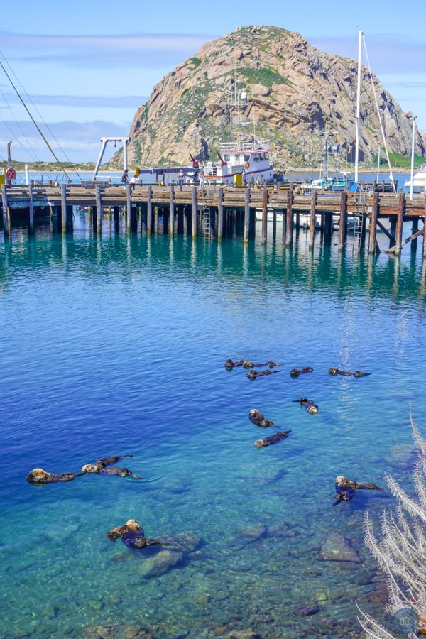 otters at morro bay ca