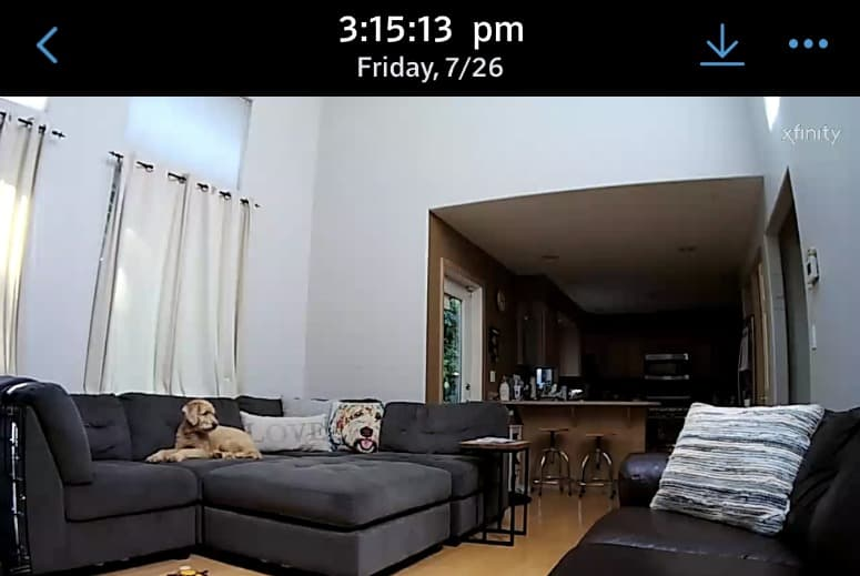 dog on xfinity security camera