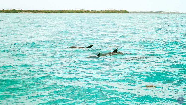dolphins in key west fl