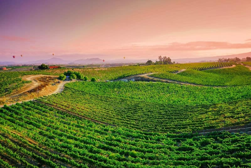 vineyards in Temecula Valley California