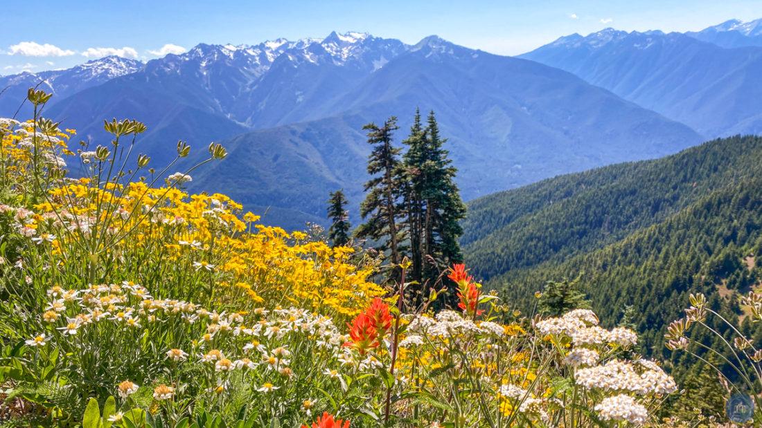 hurricane ridge hill trail hike olympic national park